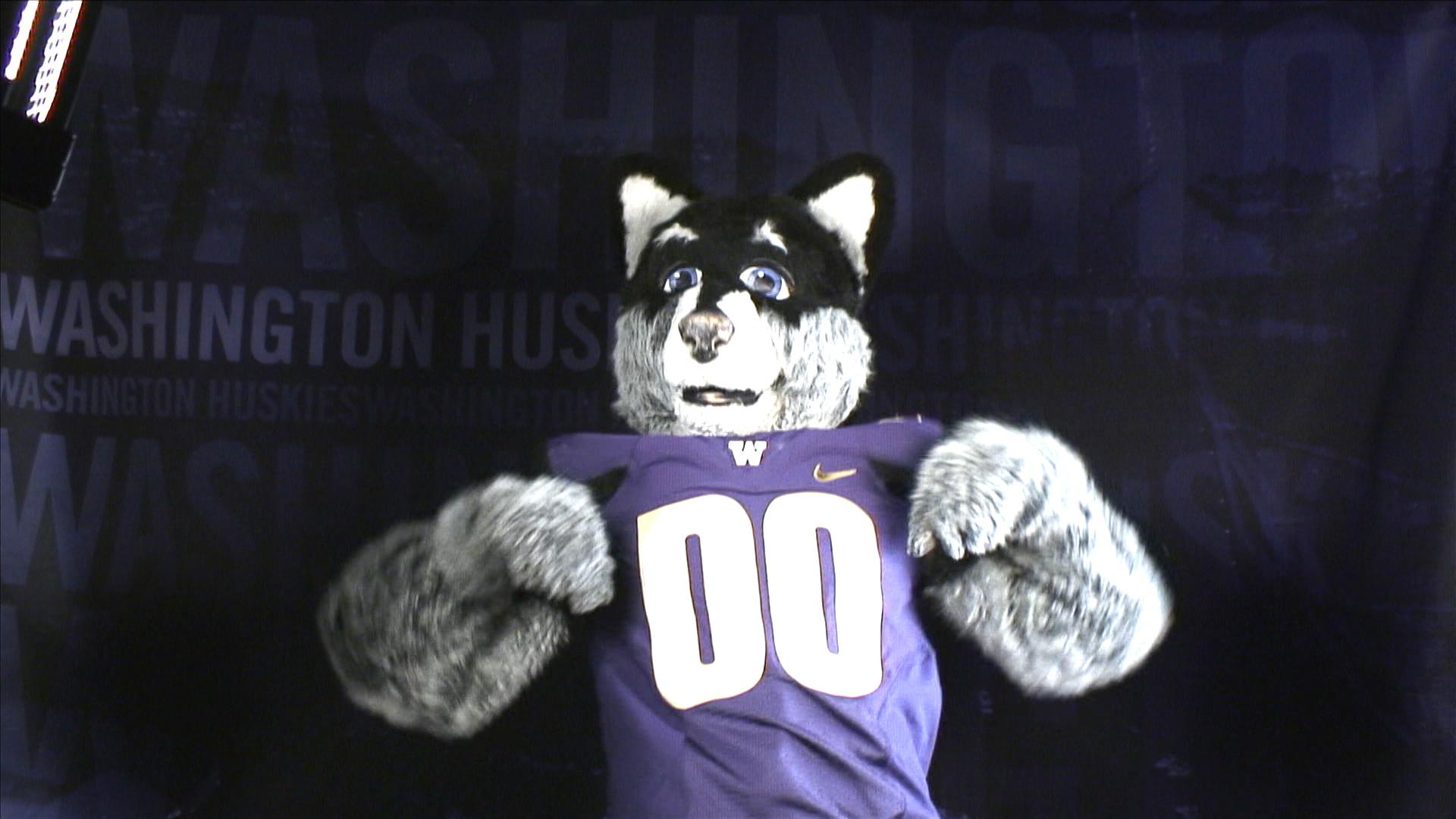 washington s harry the husky takes the mascot challenge pac 12