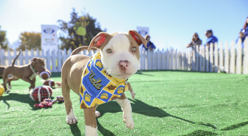 2016 Pac-12 Football Championship Game: Puppies steal the show at pregame tailgate