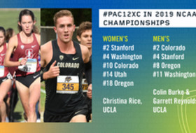 2019 NCAA Cross Country Championships