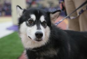 Huskies To Play In Great Alaska Shootout Next Season