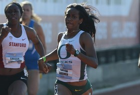 Teams begin NCAA track & field competition this week