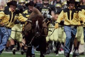 CU's Retired Mascot, Ralphie IV, Passes Away