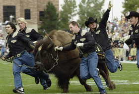 Buffs Notes: Tributes Roll In For Ralphie IV, Lacrosse Gains National Attention